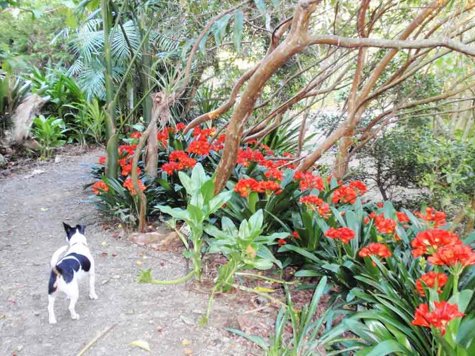 Gardens Kerikeri