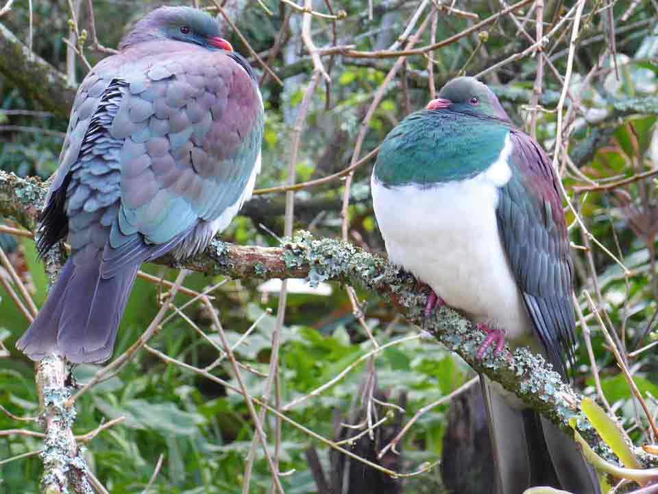 Sculpture park birds Kerikeri