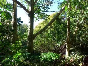 Sculpture park newzealand
